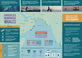 ashw_infographic_021017_300