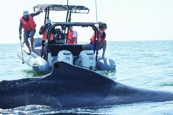 Photo  of Oman team and whale