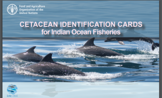 IOTC cetacean Identification cards image