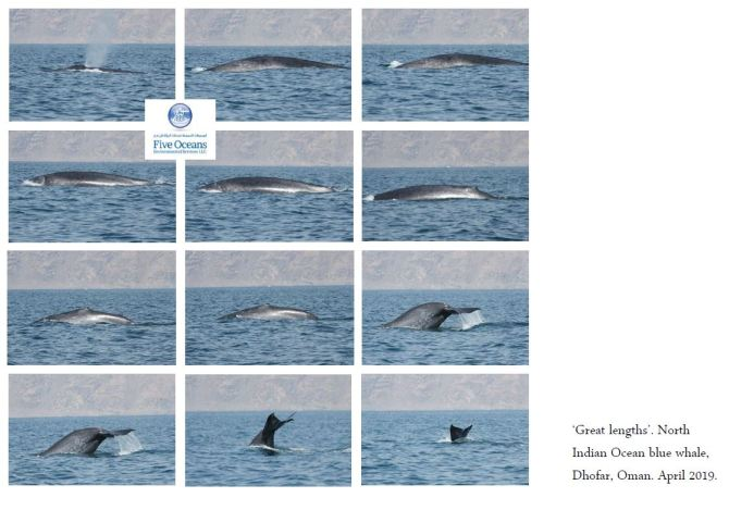 Blue whale dive sequence