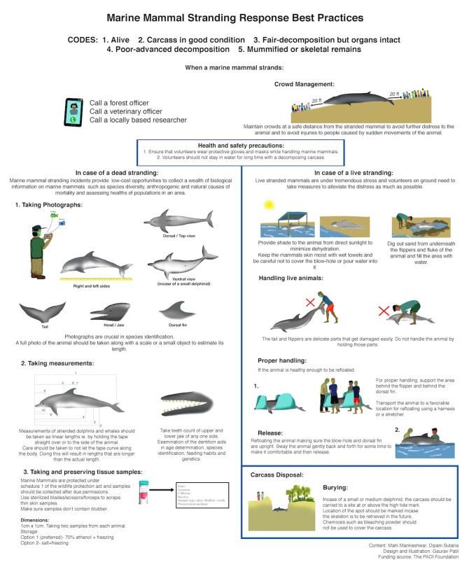 Marine mammal Stranding Response Best Pratice